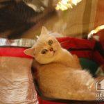У Кривому Розі відкрилася виставка котів: встигніть долучитися