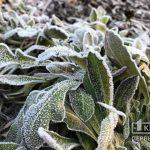 На выходных в Кривом Роге ожидаются заморозки