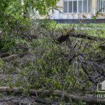 На 4-летнюю криворожанку упало дерево на детской площадке